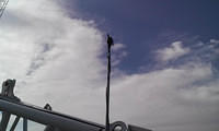 Pivoting wind vane
